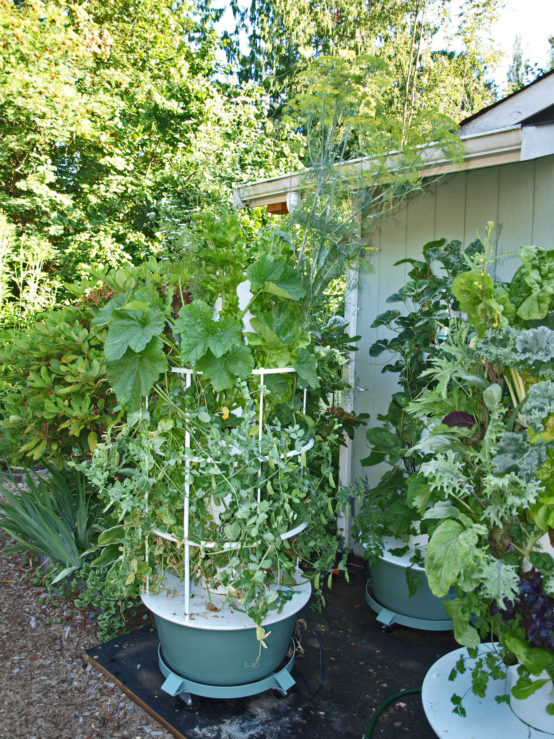 Amazing How Many Fruits and Vegetables Can Grow In A Small Space