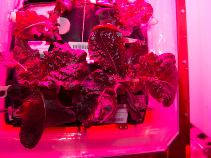 Astronauts Eat Greens Grown In Space aboard International Space Station