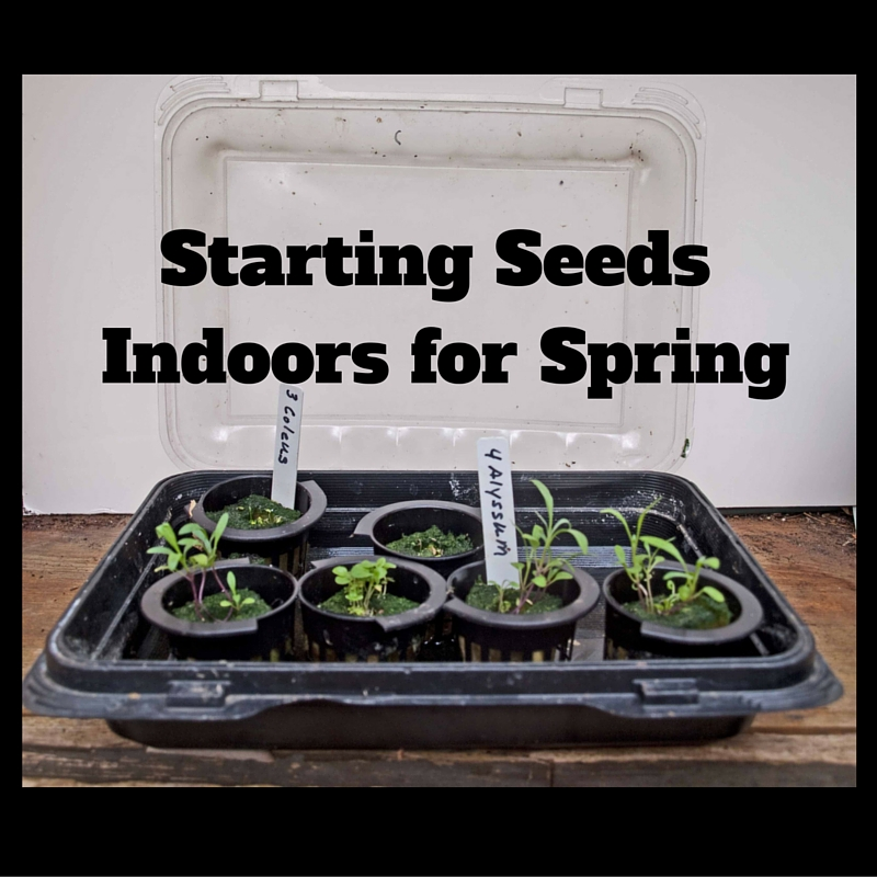 Starting Seeds Indoors for Spring